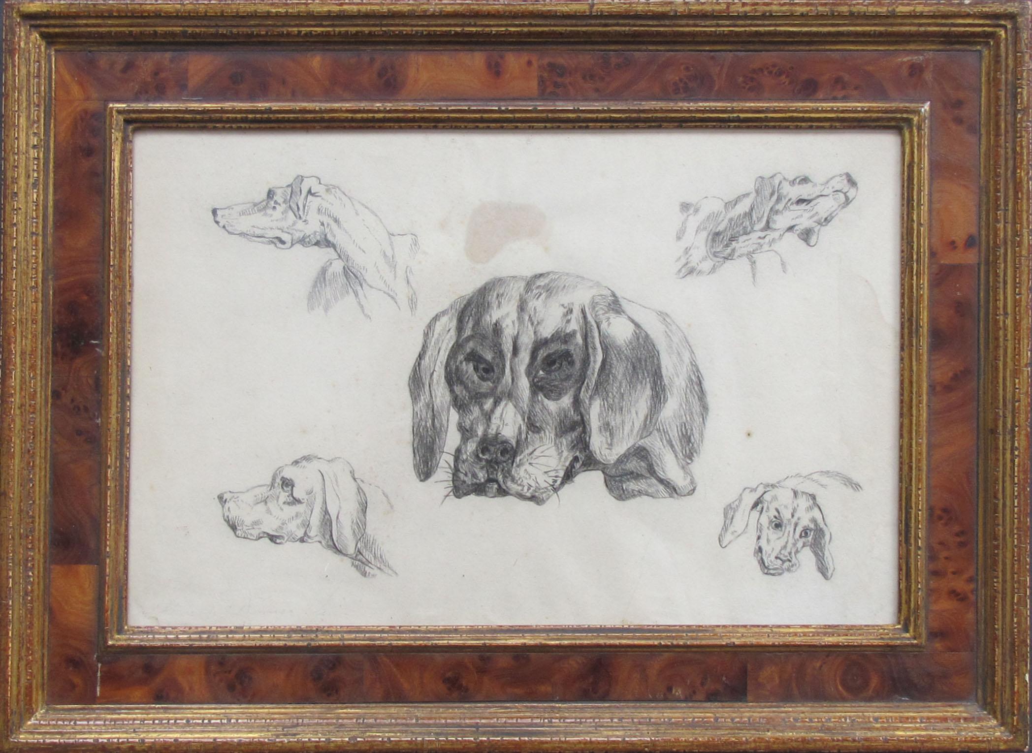 hondenstudie 19e eeuw